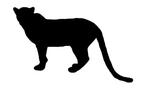500x300 Wild Cat Archives