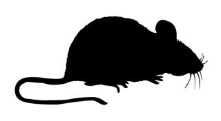 320x176 Mouse Silhouette Decal Sticker