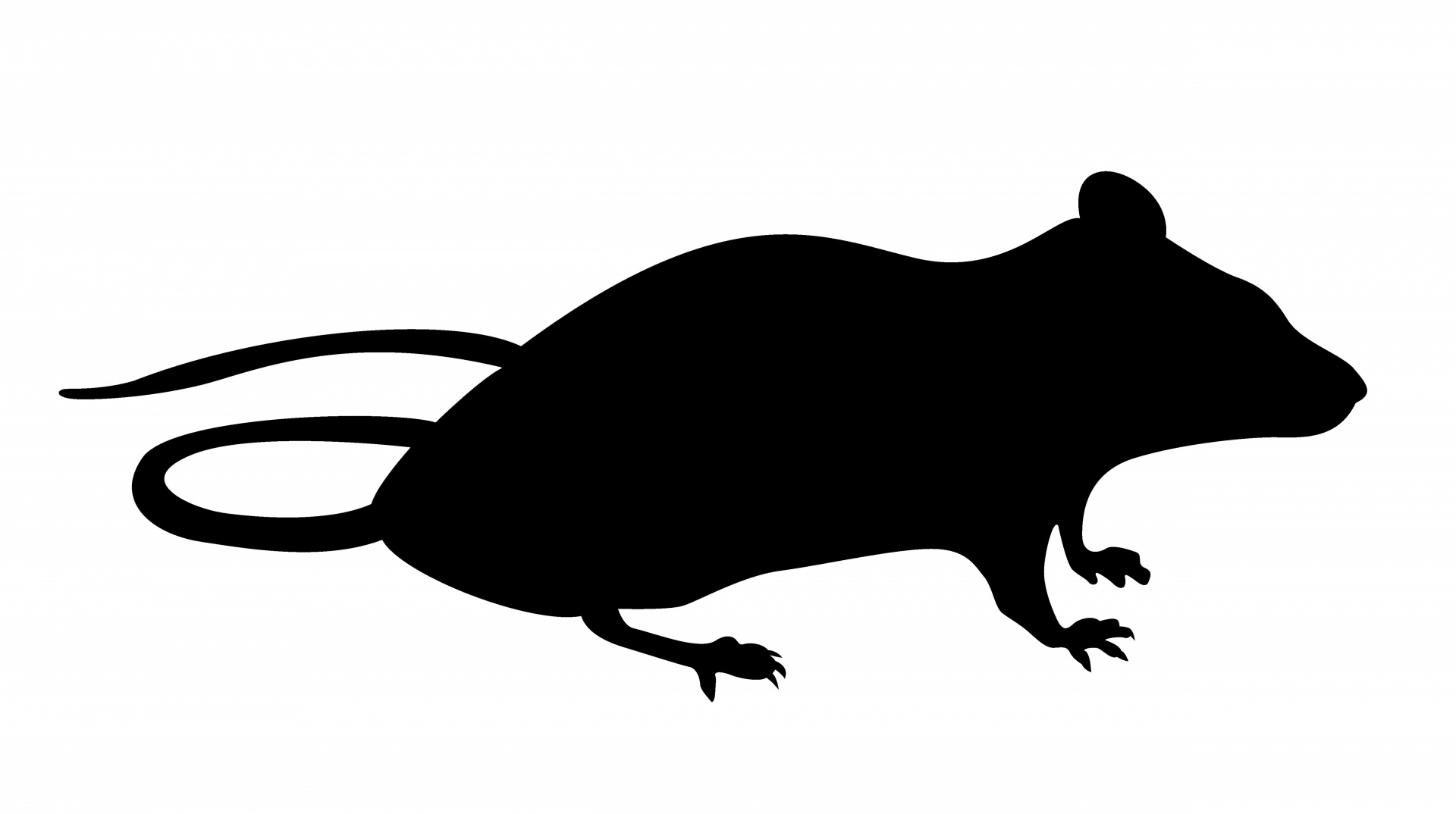 1920x1074 Mouse Silhouette Sitting Free Stock Photo