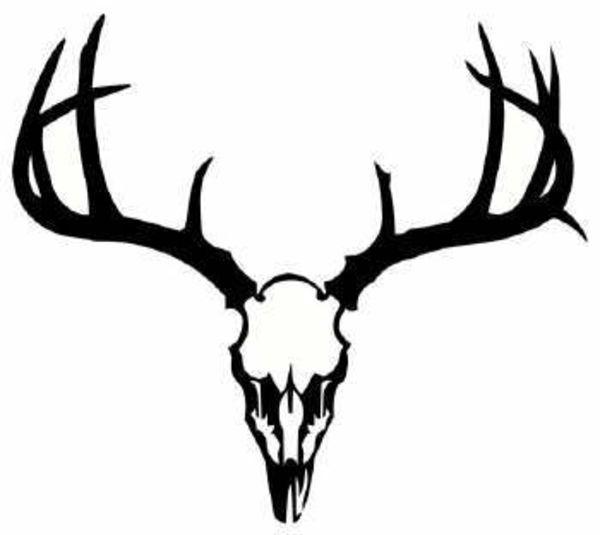 600x535 Mule Deer Antlers Clip Art