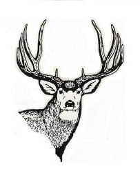 203x251 Bowhunting Mule Deer Tactics To Overcome One Of Hunting's Biggest