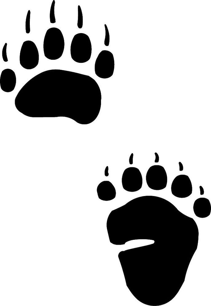 687x999 Bear Tracks And Grass Tattoo Native American Bear Paw Print