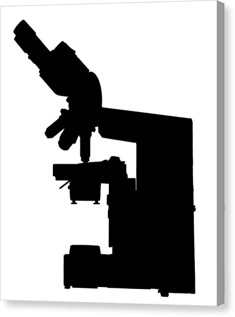 462x622 Microscope Silhouette Photograph By Natural History Museum, London