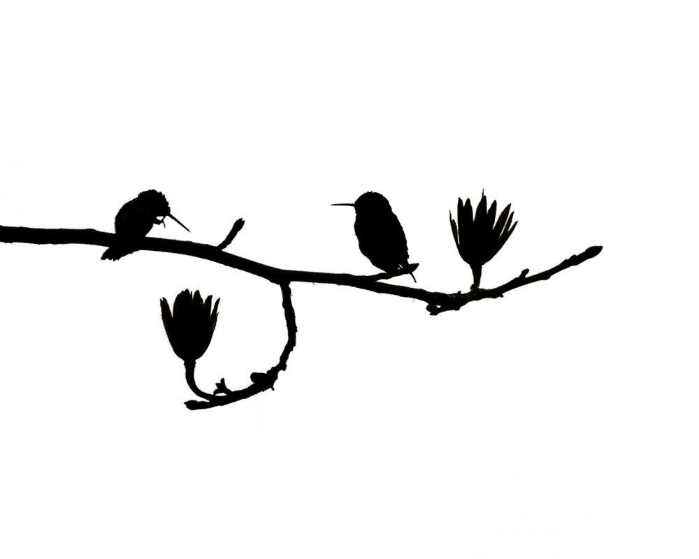 1000x800 Hummingbird Art Nature Print Birds Black White Minimalist