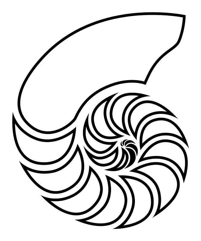 666x800 Nautilus Outline Posters By Lucid Reality Redbubble