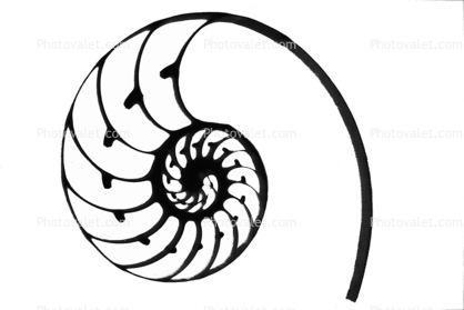 418x279 Cutaway Of A Nautilus Shell Silhouette, Shape, Logo Images