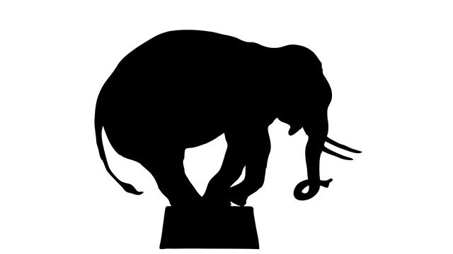640x360 Escaped Elephant Takes A Stroll Through Wisconsin Neighborhood