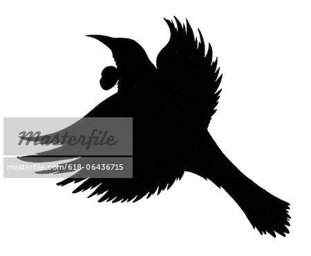 450x371 Black Silhouette Of A New Zealand Native Tui Bird