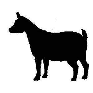 300x300 Nigerian Dwarf Goat Clipart