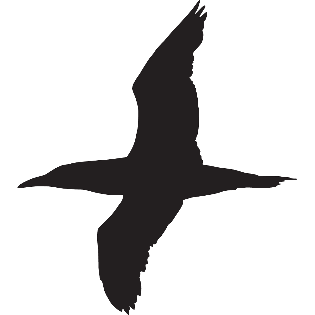 1024x1024 Northern Gannet Overview, All About Birds, Cornell Lab Of Ornithology