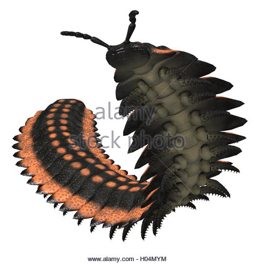 520x540 Giant Centipede Cut Out Stock Images Amp Pictures