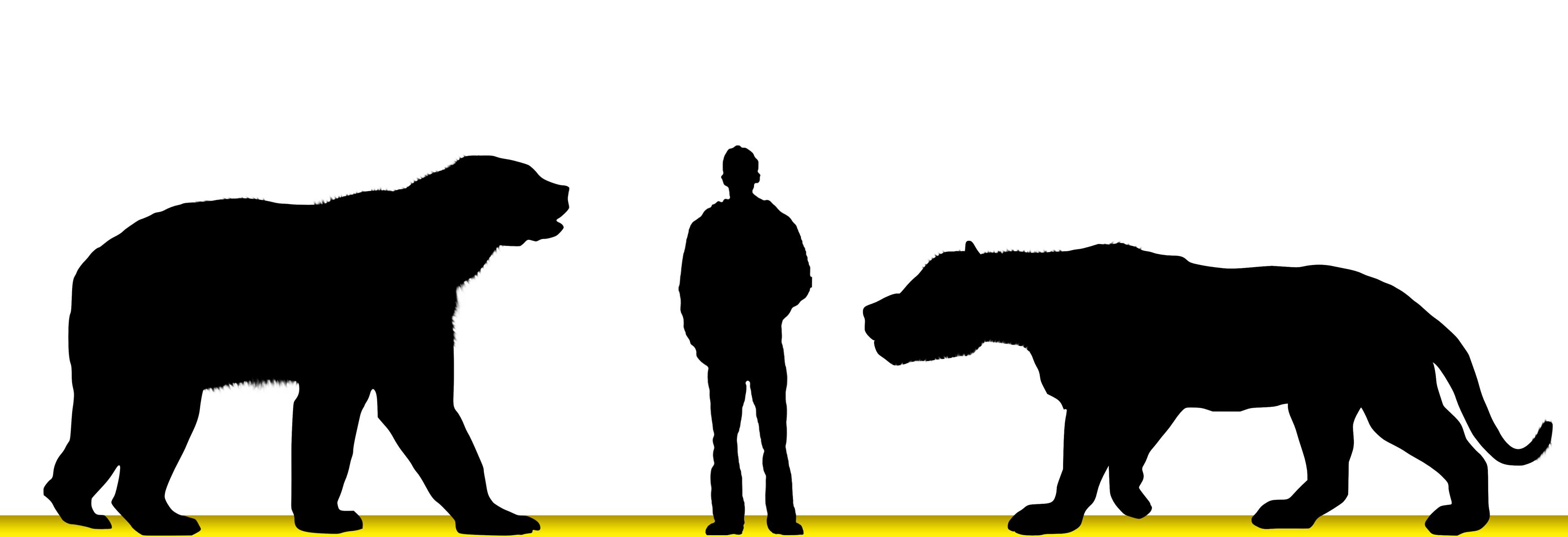 3500x1200 North American Giant Short Faced Bear V Amphicyon Ingens