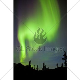 325x325 Yukon Taiga Spruce Northern Lights Aurora Borealis Gl Stock Images