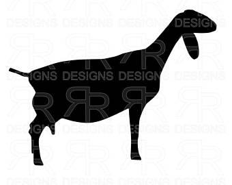 340x270 Nubian Dairy Goat Etsy