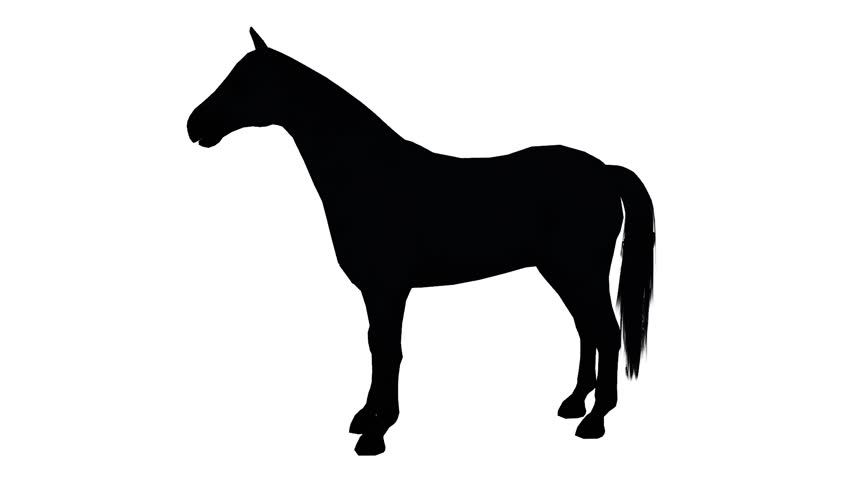 852x480 Black Horse Foal Pet Running,farm Animal Wild Life Silhouette