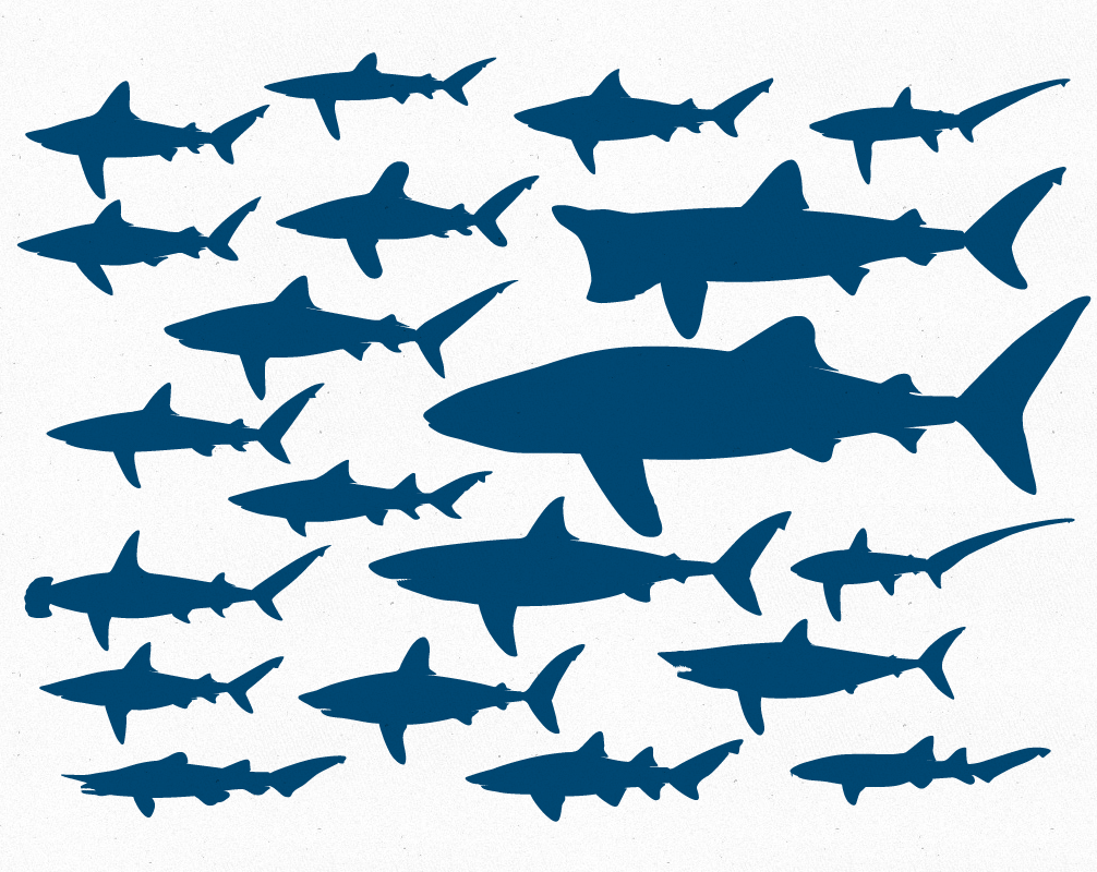 1006x800 Free Vector File 20 Shark Silhouettes The Creative Portfolio