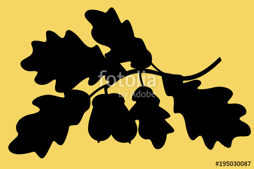 500x334 Oak Branch Silhouette Illustration Stock Image And Royalty Free