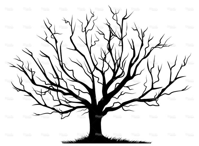 665x490 Deciduous Bare Tree With Empty Branches Black Silhouette Isolated