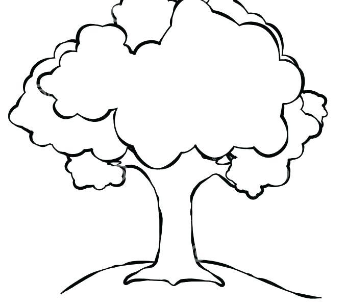 678x600 Oak Tree Outline Oak Tree Silhouette Free Oak Tree Silhouette Clip