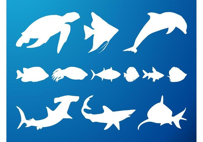 700x490 Dolphin Free Vector Art