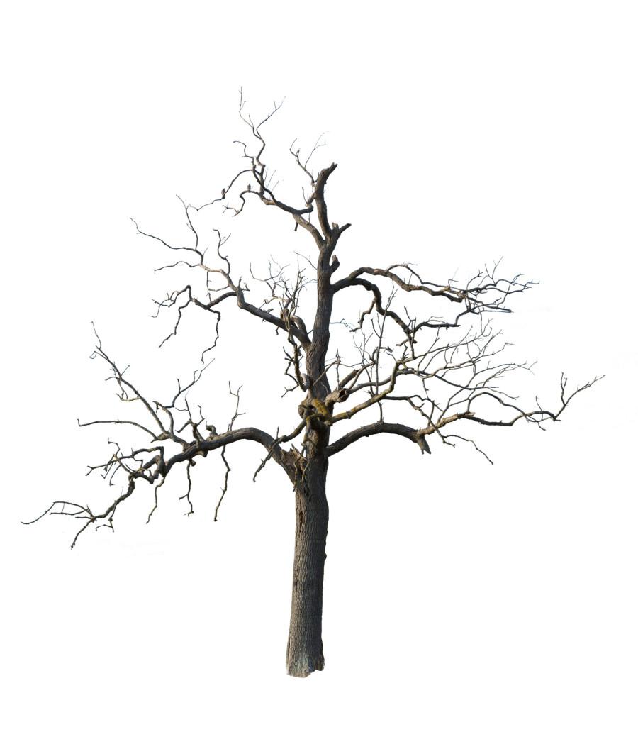 900x1056 Drawn Dead Tree Old Tree