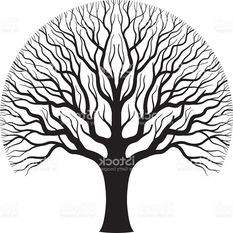 1228x1227 Old Oak Tree Illustration Gm Createmepink