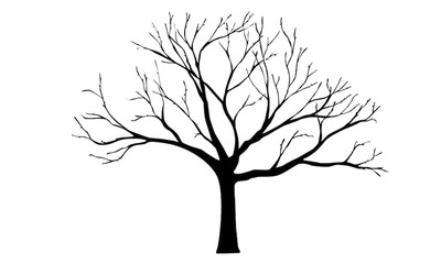 400x240 Old Dry Tree Silhouette