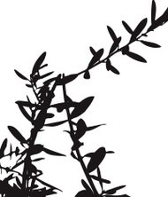 190x222 Olive Tree Branch Premium Clipart