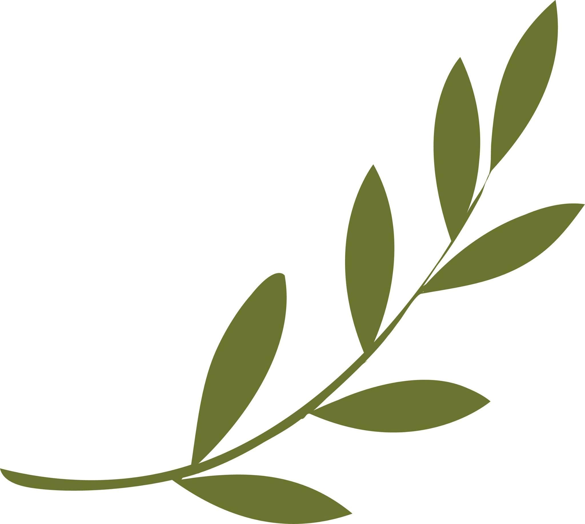 2048x1837 Olive Branch Popular Leaf Shapes In Design Craft