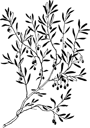 347x492 Olive Branch Silhouette