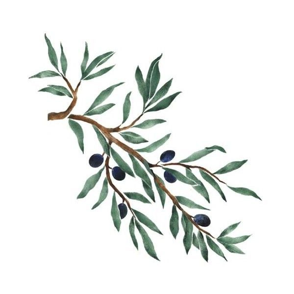 600x600 Drawing Of Olive Tree