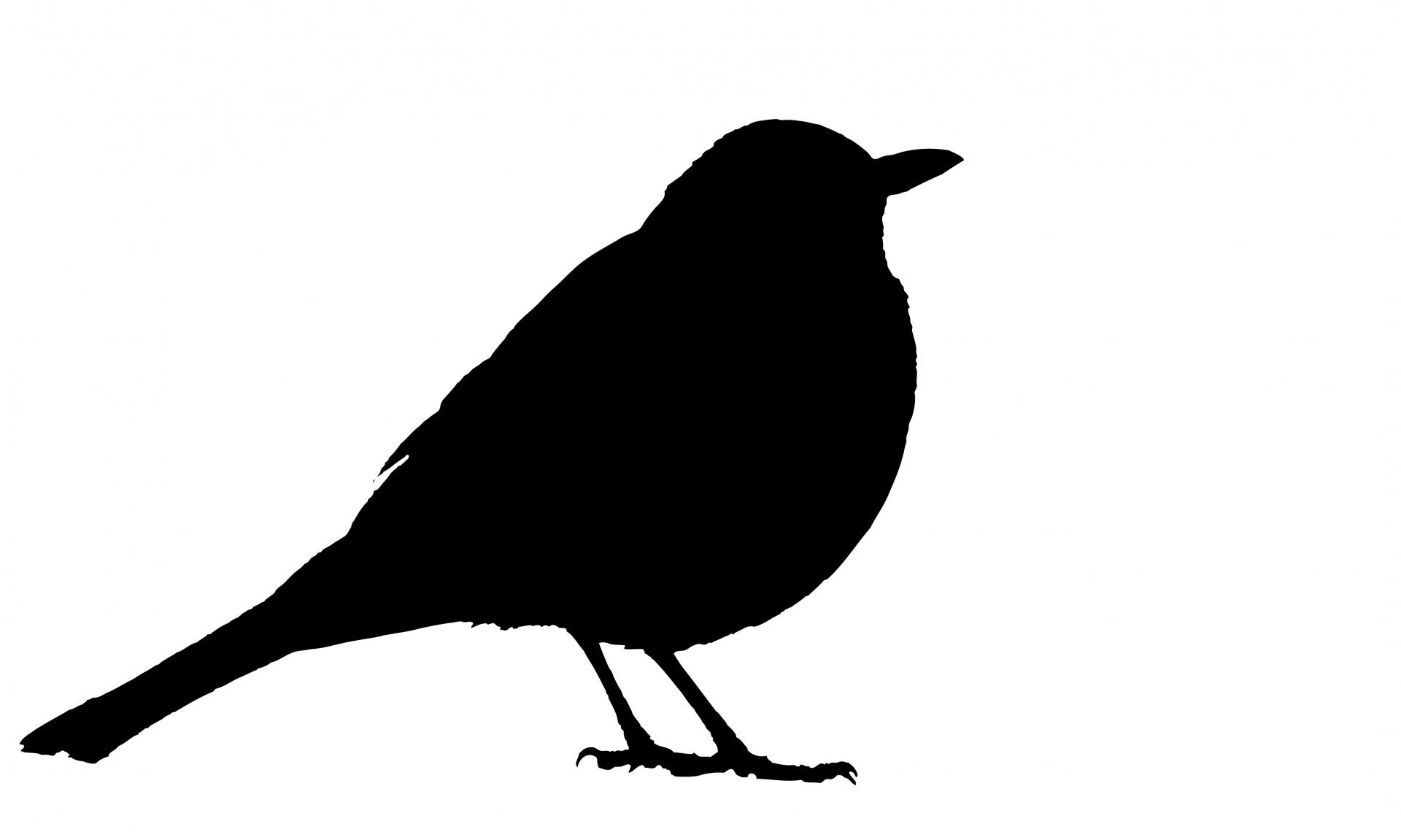 1920x1151 Blackbird Silhouette Free Stock Photo