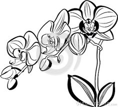 236x215 Magic Coloring Orchid Flower Template Silhouette Cameo