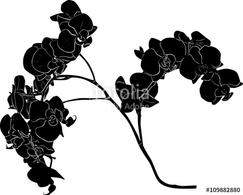 500x403 Black Orchid Branch Sketch Illustration Stock Image And Royalty