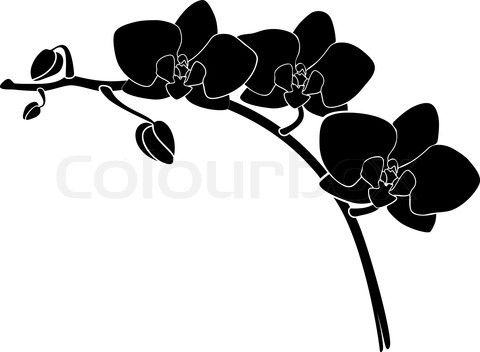 480x352 3871539 945455 Vector Orchid Silhouette.jpg Fashion