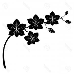 300x300 Beautiful Orchid Flower Outline Vector Lazttweet