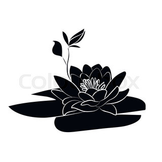 320x320 Orchid Branch Silhouette Vector For Design Stock Vector Colourbox