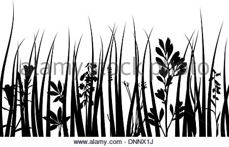 450x288 Grass Silhouettes Ornate On The White Background Stock Vector Art