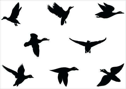 501x352 Flying Duck Silhouette Vector Graphics Best Rubber Duck Clip Art