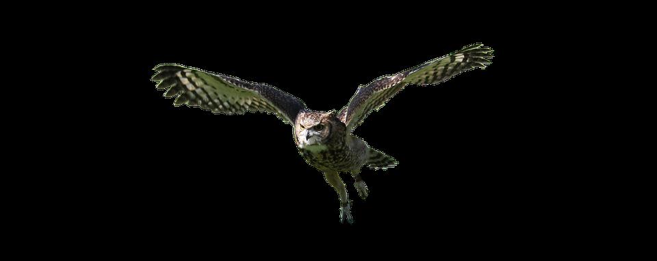 960x381 Free Photo Bird Owl Flying Wildlife Animal Predator Nature