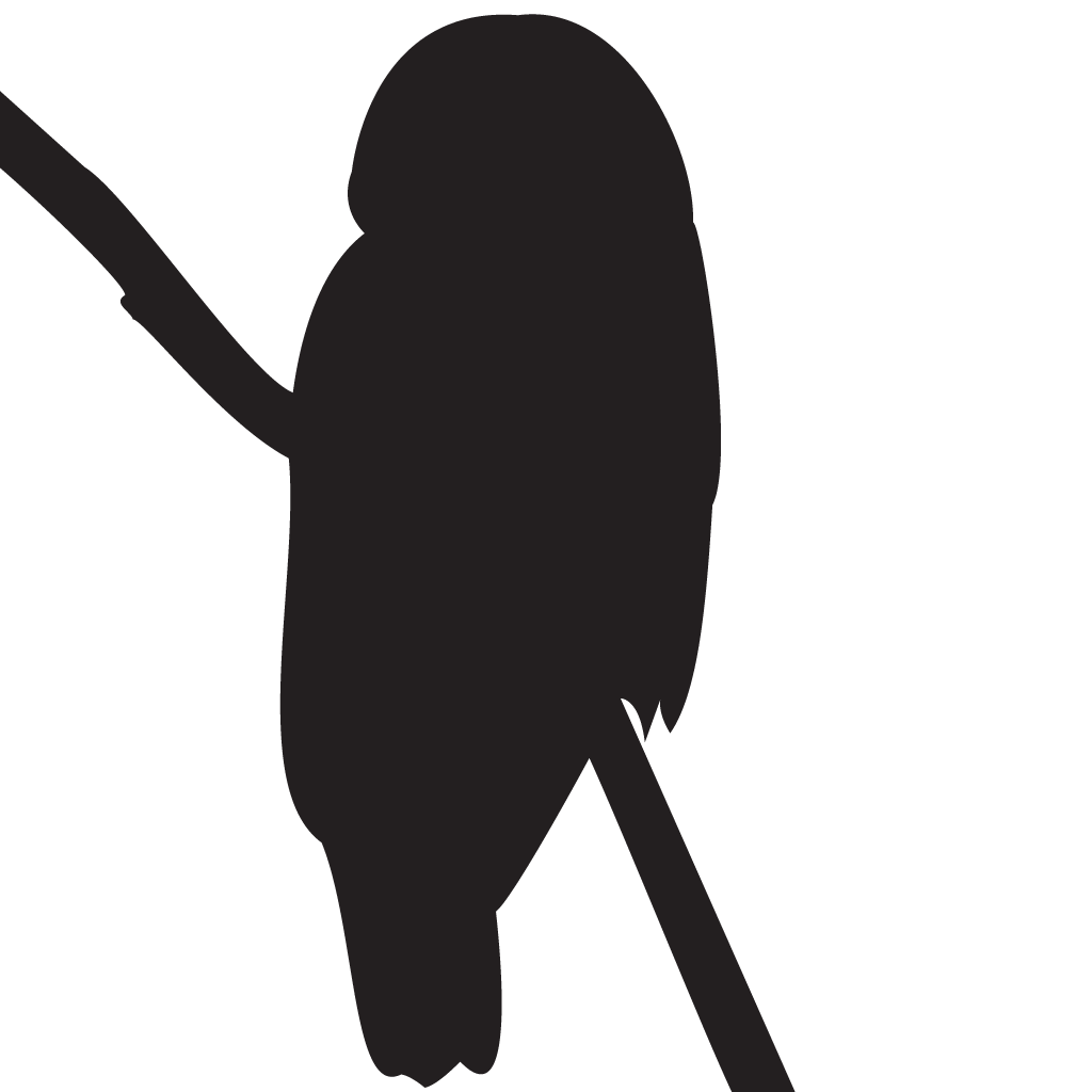 Owl Silhouette Images