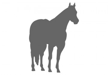 360x250 Horse Wall Decals