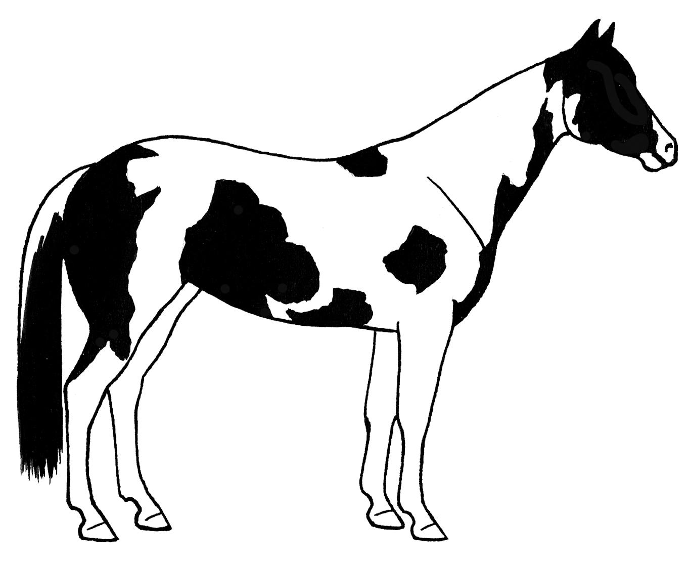 1363x1109 Paint Horse Clipart