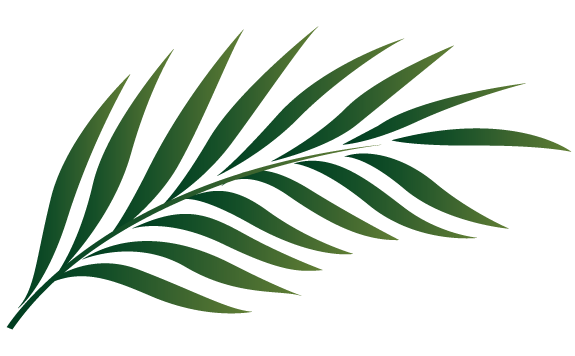 palm leaf silhouette at getdrawings com free for personal use palm rh getdrawings com  palm leaf clip art free
