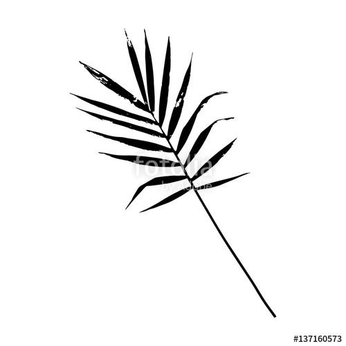 500x500 Palm Leaf Vector Illustration. Black And White Palm Leaf