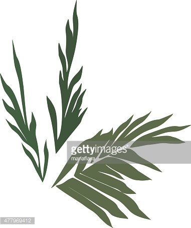 381x454 Silhouettes Of Palm Leaves Set Premium Clipart