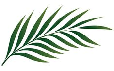 235x146 Palm Leaves Silhouettes Set Arte Tattoo And Piercing