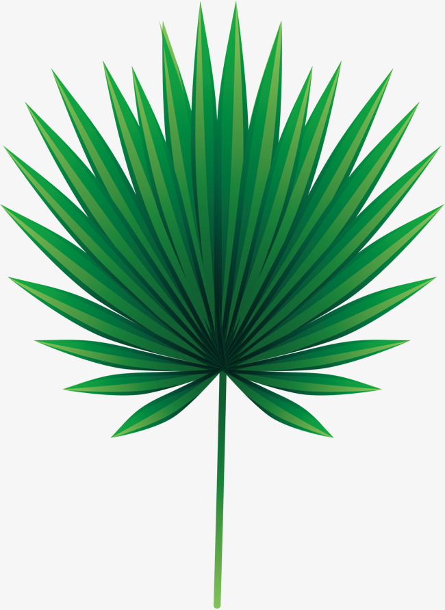 650x891 Palm Tree Png, Vectors, Psd, And Clipart For Free Download Pngtree