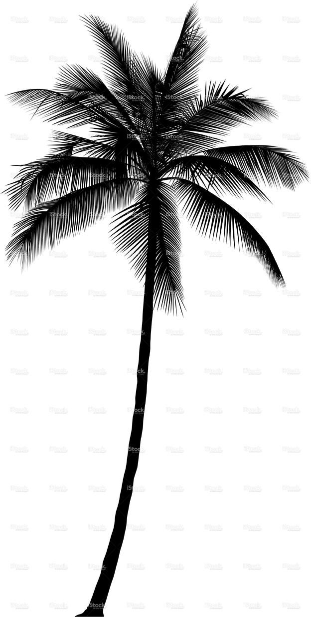 624x1235 Palm Tree Print, Palm Leaves Print, Palm Tree Art, Palm Tree Wall