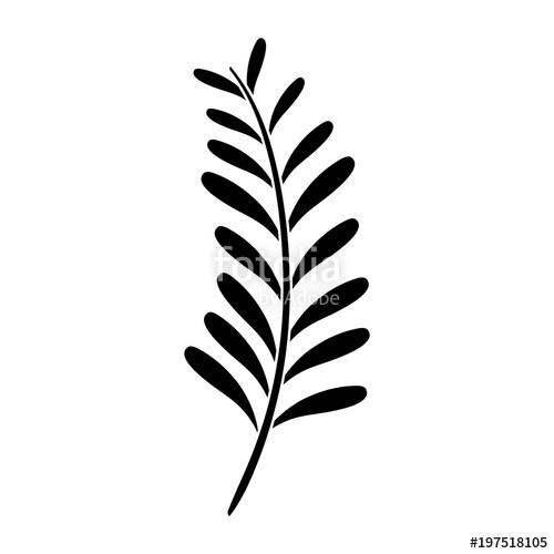 500x500 Silhouette Palm Leaves Tropical Nature Plant Stock Image